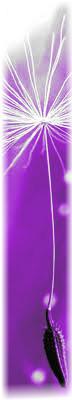 Körper-Atem-Stimme-lila